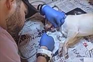 Чистка зубов ультразвуком собакам и кошкам