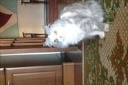 передержка кошки Умы