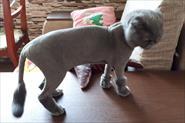 Стрижка собак и кошек :)))